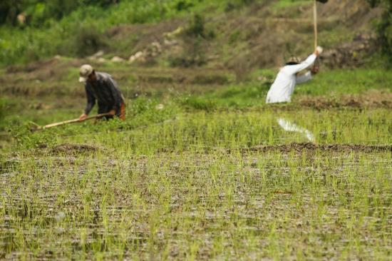 Rizieres adi arunachal pradesh