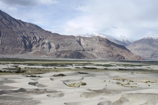 Vallee de la nubra hunder desert froid